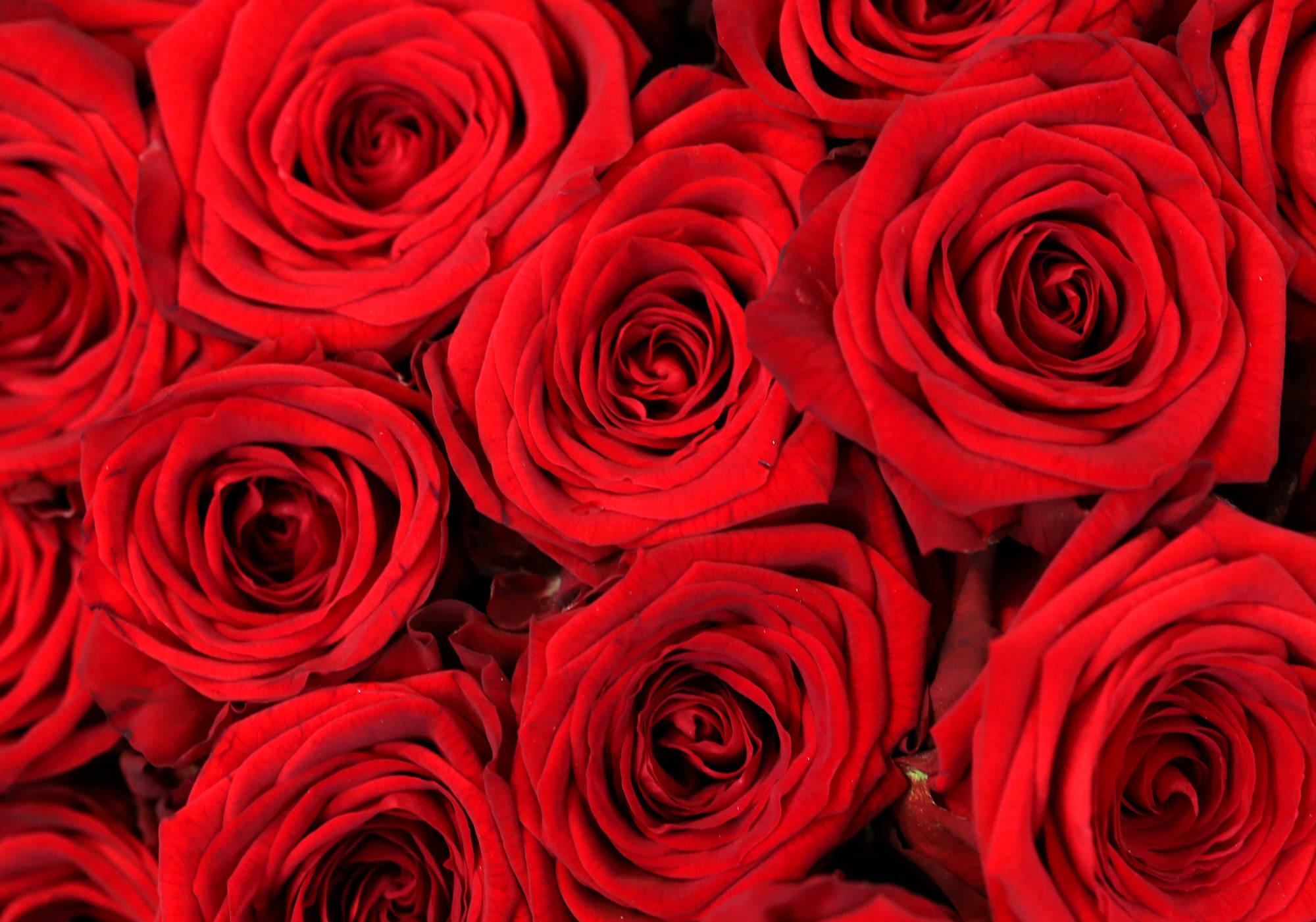 valentinstag ausrede rosen seien ausverkauft z hlt nicht s dwest rhein neckar zeitung. Black Bedroom Furniture Sets. Home Design Ideas