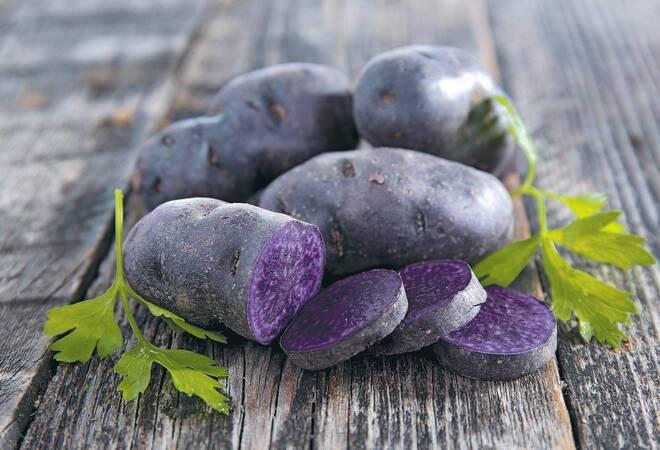violette kartoffel schmeckt nach maronen rhein neckar zeitung regionalnachrichten rhein. Black Bedroom Furniture Sets. Home Design Ideas