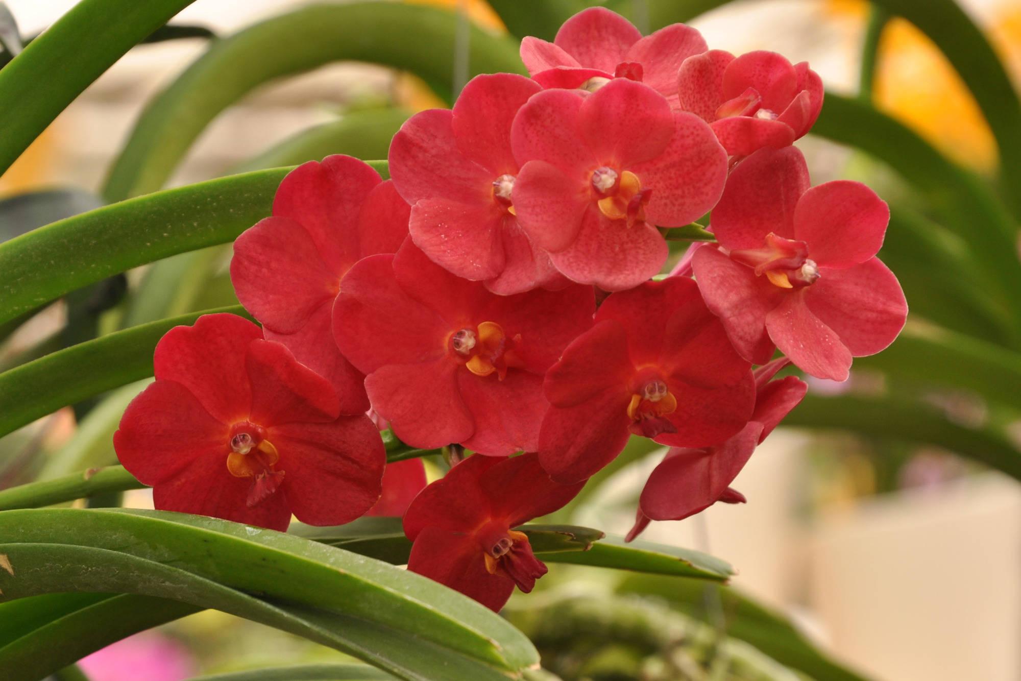 orchidee vanda w chst nicht im topf tipps f r eine heikle pflanze haus garten rhein. Black Bedroom Furniture Sets. Home Design Ideas