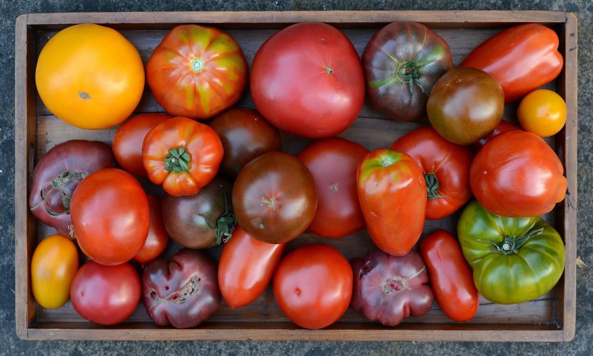 san marzano tomaten in blik waar te koop