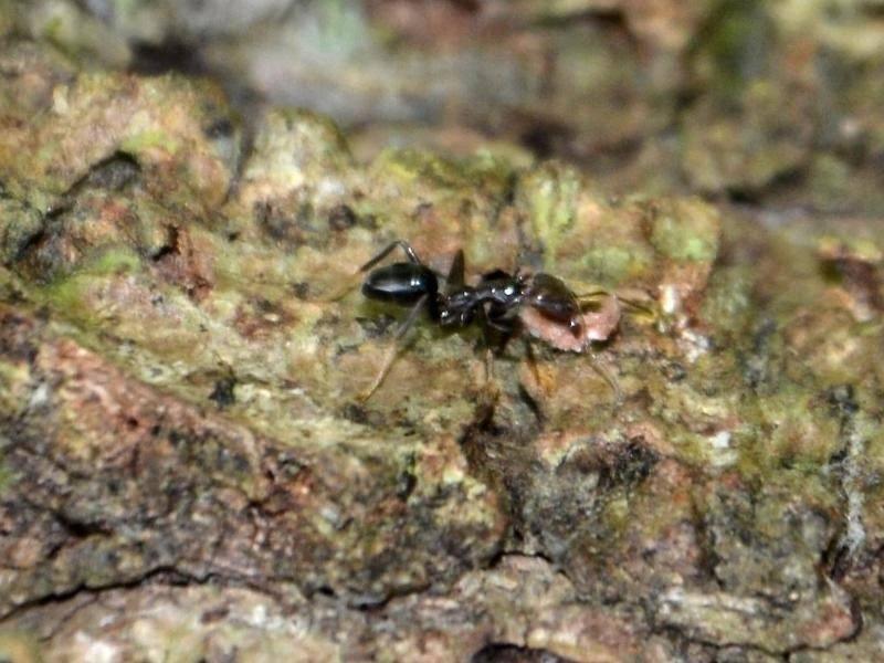 pflanzen d ngen ernten ameisen als g rtner wissenschaft rhein neckar zeitung. Black Bedroom Furniture Sets. Home Design Ideas