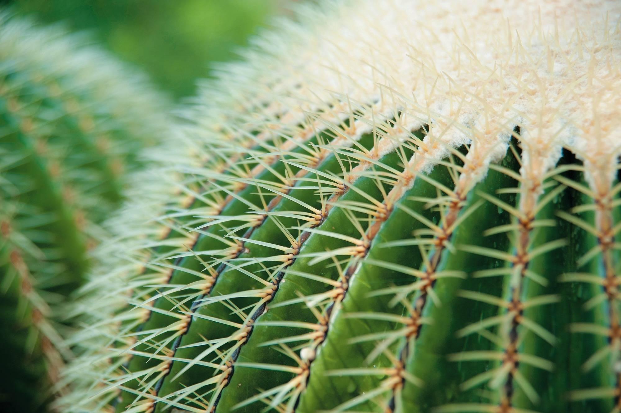 kaktus im winter wenig gie en haus garten rhein. Black Bedroom Furniture Sets. Home Design Ideas