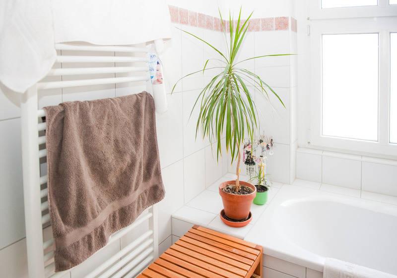 unter 500 lux stirbt die zimmerpflanze exemplare f r. Black Bedroom Furniture Sets. Home Design Ideas
