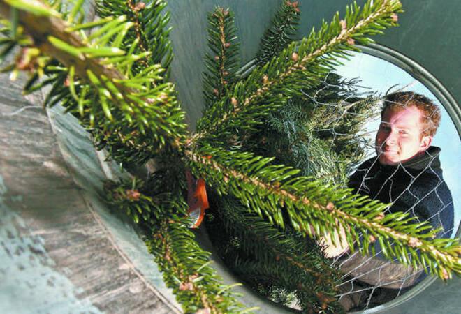 Douglasie Weihnachtsbaum Kaufen.Weihnachtsbaum Tipps Douglasien Duften Mehr Als Nordmann Tannen