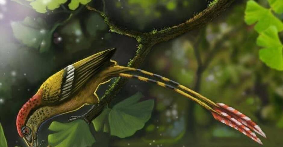 seltener s damerika fund fossiler vogelzwerg mit band federn wissenschaft rhein neckar zeitung. Black Bedroom Furniture Sets. Home Design Ideas