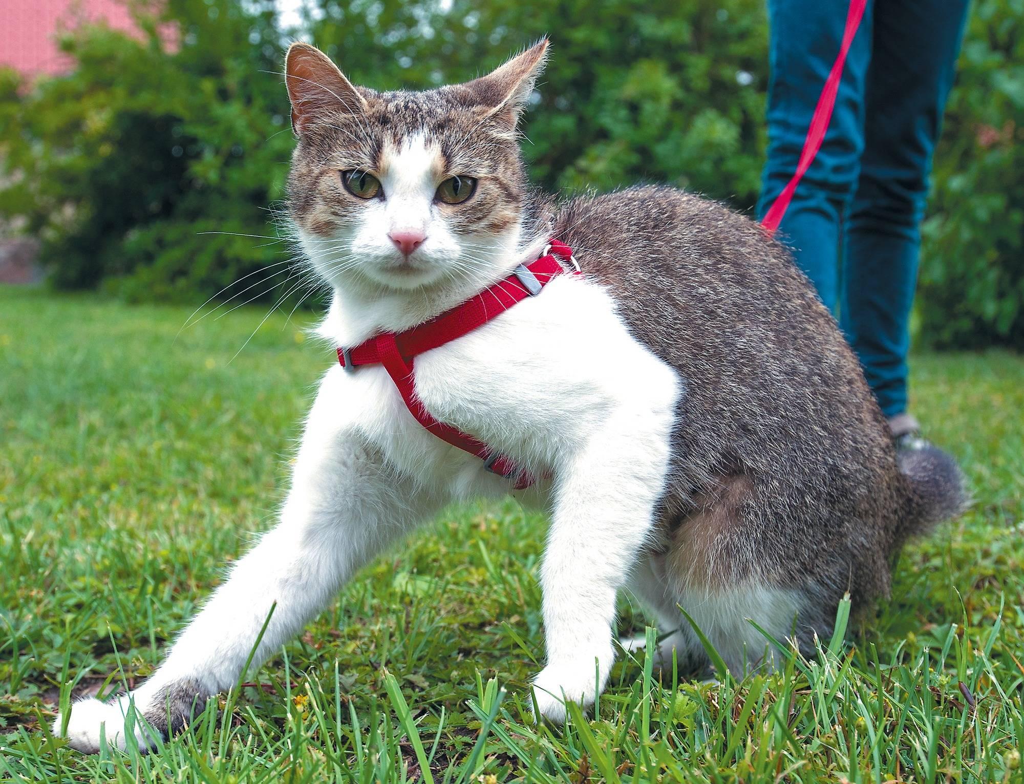 Die Katze muss das Sagen haben - Rhein-Neckar-Zeitung ...
