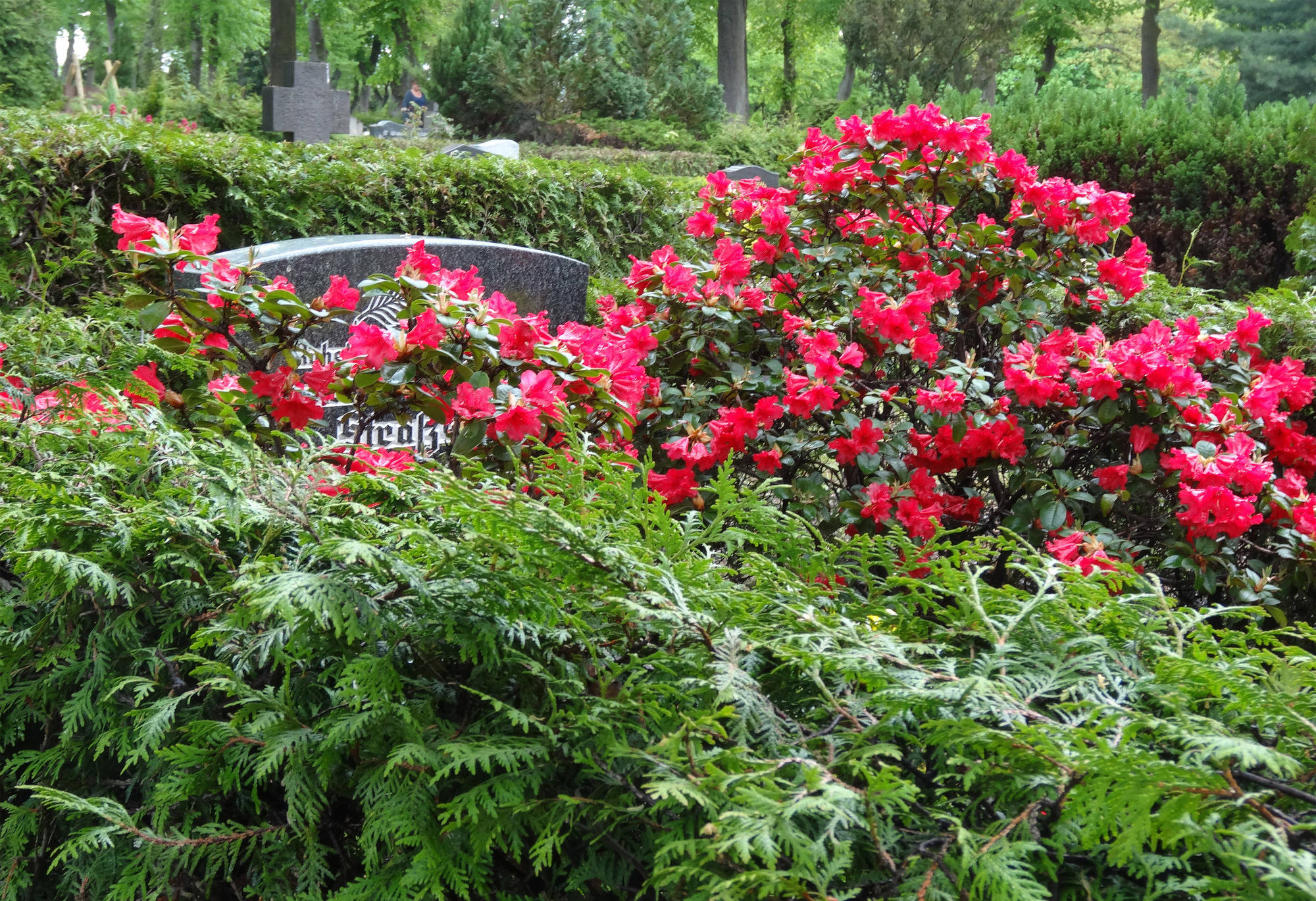 Blumen Für Die Lieben Tipps Zur Erstbepflanzung Des Grabes Haus