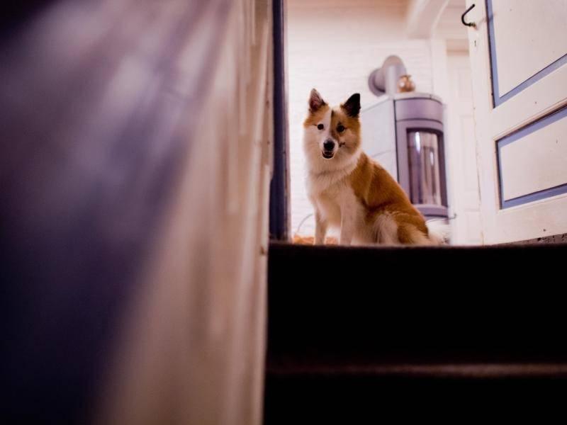 streit um hund toby gericht will tier inspizieren panorama rhein neckar zeitung. Black Bedroom Furniture Sets. Home Design Ideas