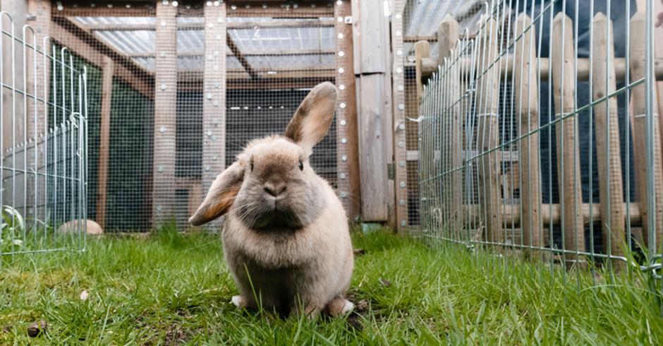 Charmant Kaninchen Stift Draht Fotos - Der Schaltplan ...