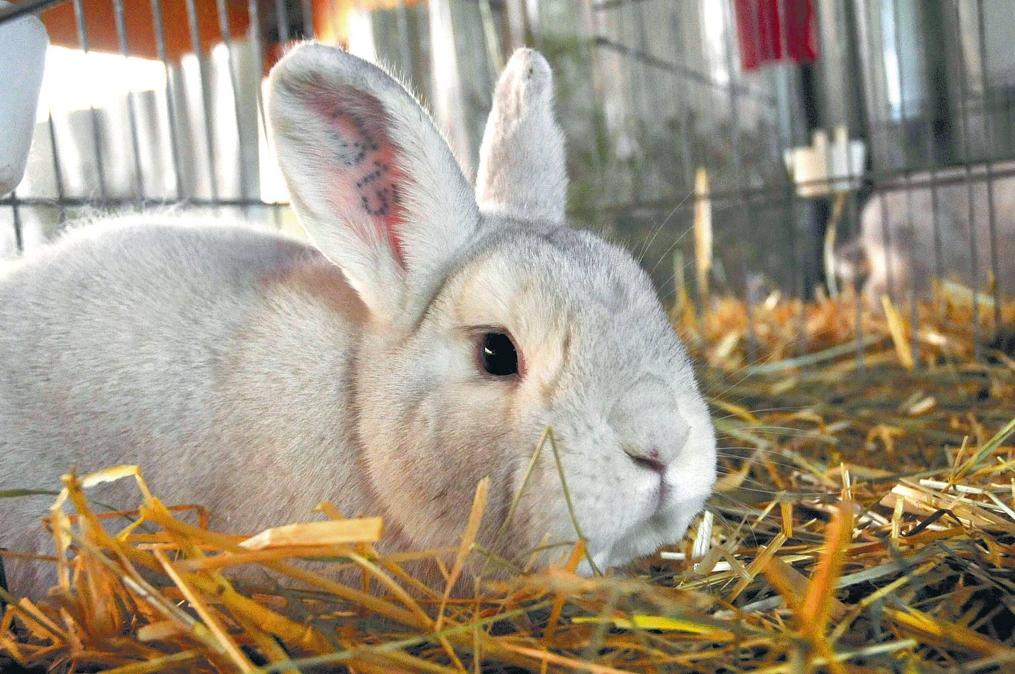 mittel gegen kaninchen so werden sie wildkaninchen los egarden tierplanet aus liebe zum tier. Black Bedroom Furniture Sets. Home Design Ideas