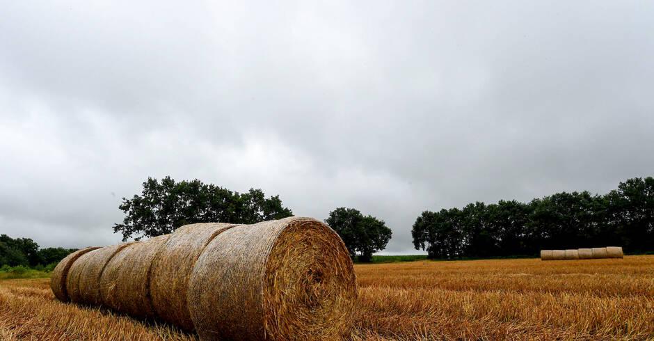 Wetter Wilhelmsfeld