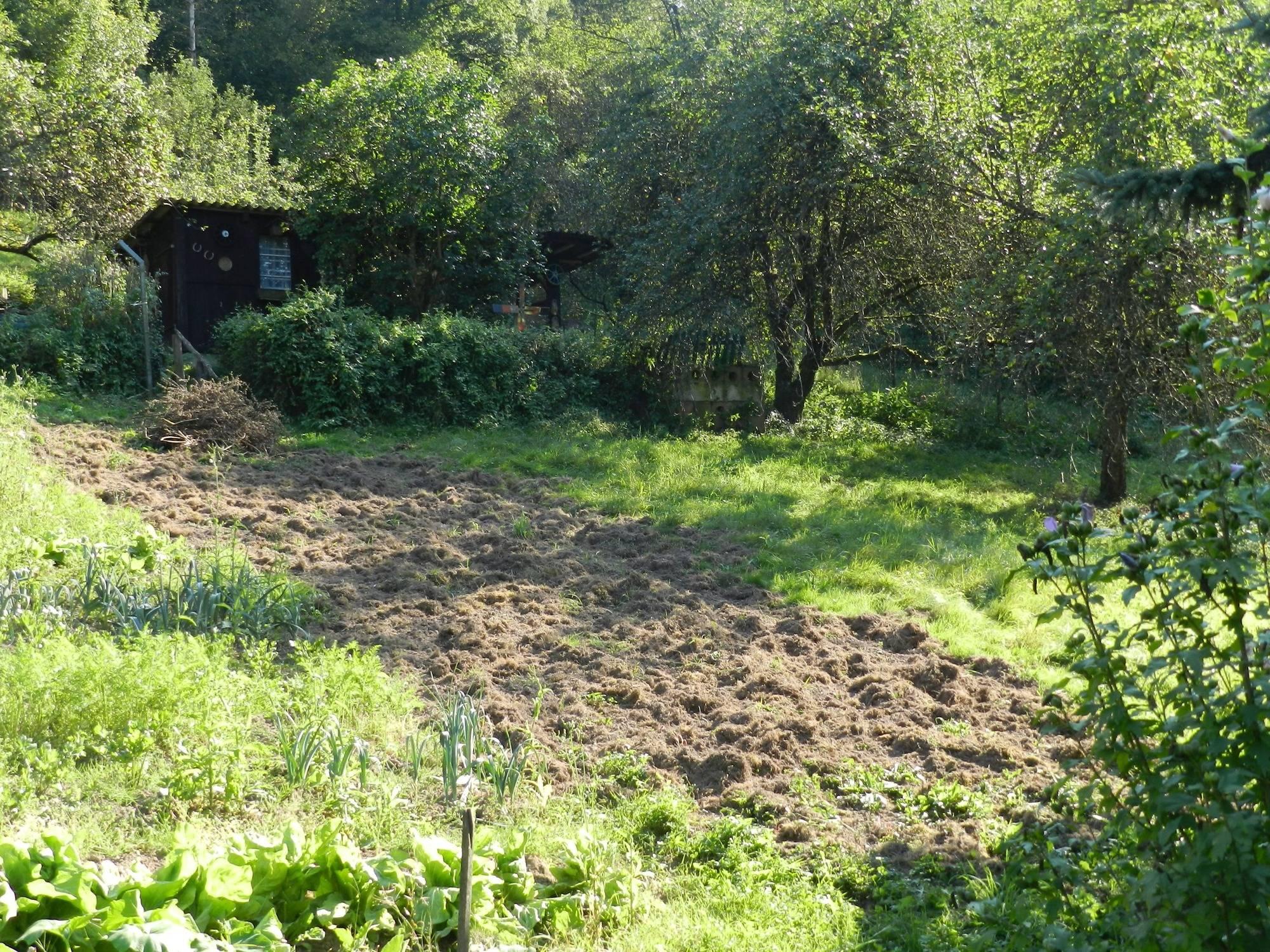 eberbach: wildschweine verwüsten kleingarten - eberbach - rhein