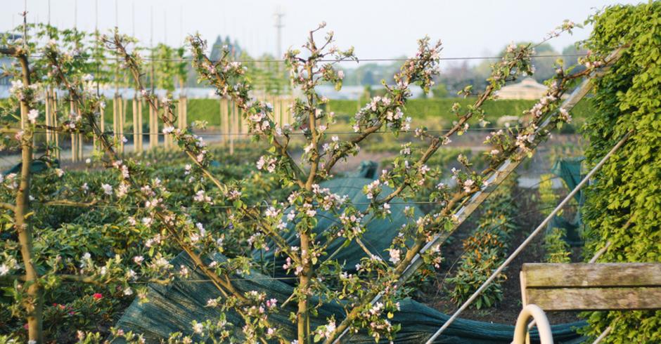 Viel Obst Auf Kleiner Flache Spalierobst In Den Garten Setzen