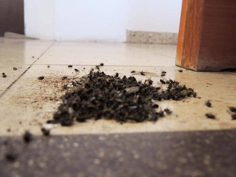 kammerj ger bek mpft fliegen in pf lzischer kirche panorama rhein neckar zeitung. Black Bedroom Furniture Sets. Home Design Ideas