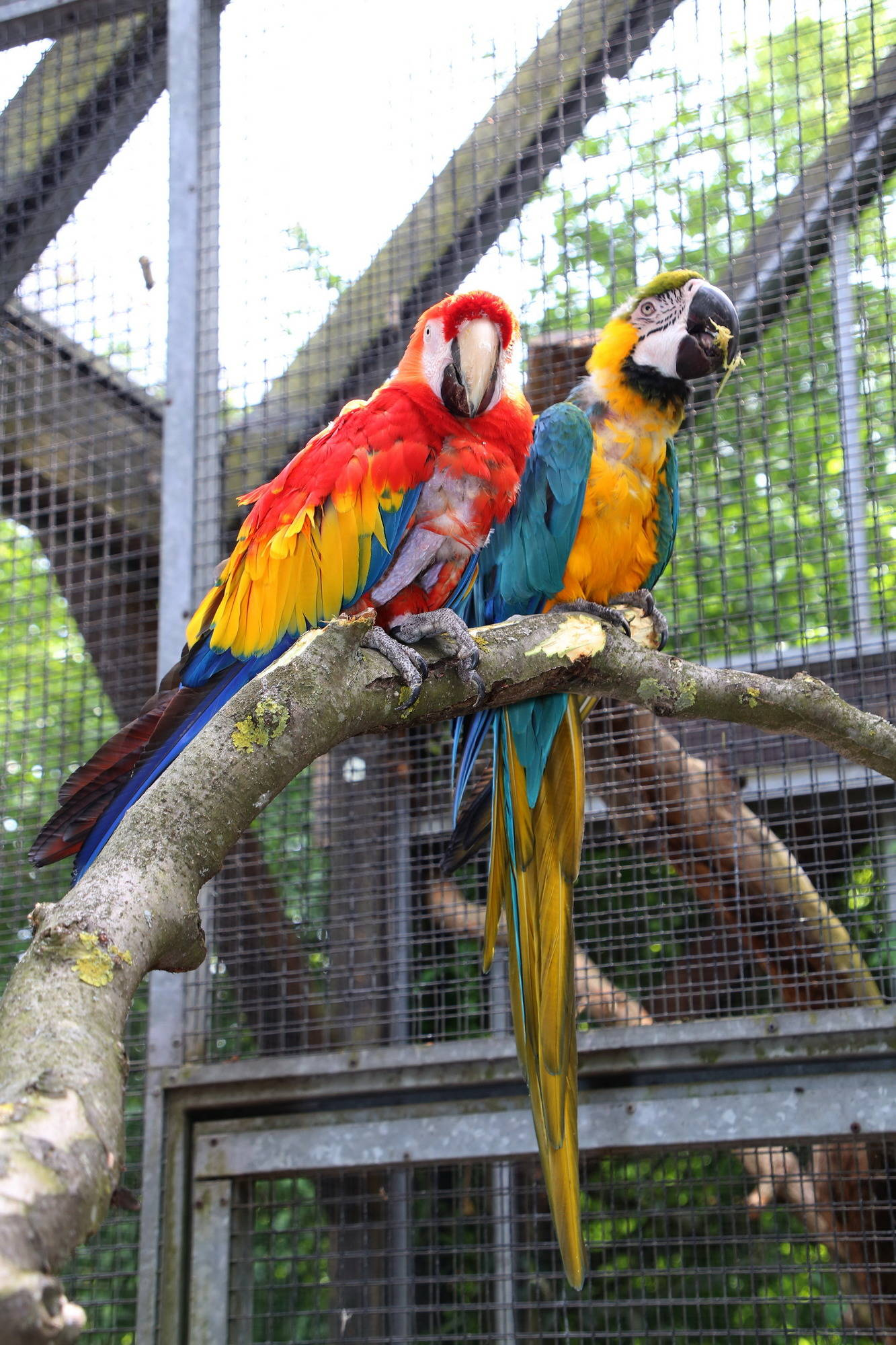 pippis papagei rosalinda lebt jetzt alleine im karlsruher zoo s dwest rhein neckar zeitung. Black Bedroom Furniture Sets. Home Design Ideas
