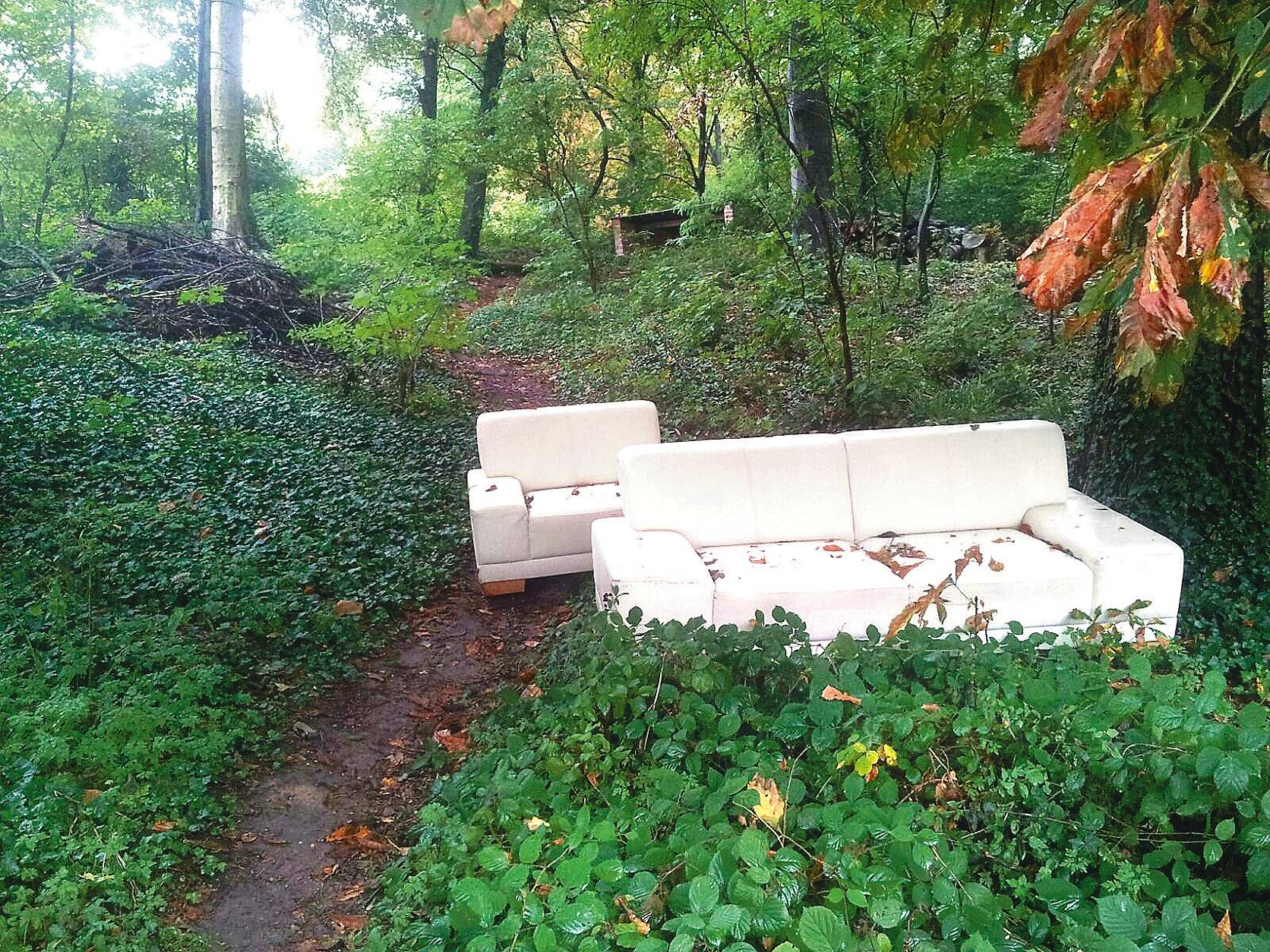 f r manche ist der heidelberger stadtwald eine m llkippe nachrichten aus heidelberg rhein. Black Bedroom Furniture Sets. Home Design Ideas