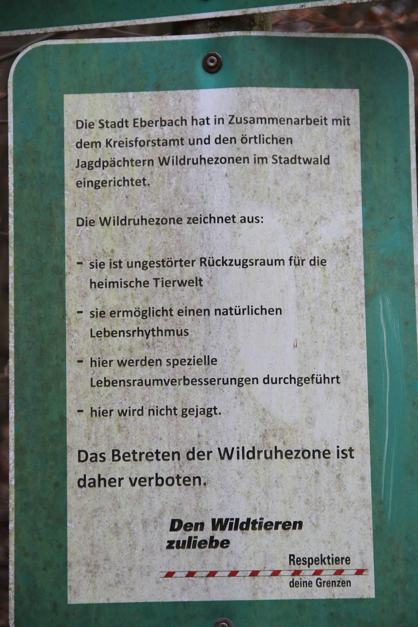 Rotwild Soll In Eberbach Verstärkt Gejagt Werden Eberbach Rhein
