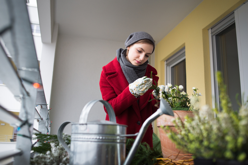 immergr nes und eine prise bl ten pflanzen f r den. Black Bedroom Furniture Sets. Home Design Ideas
