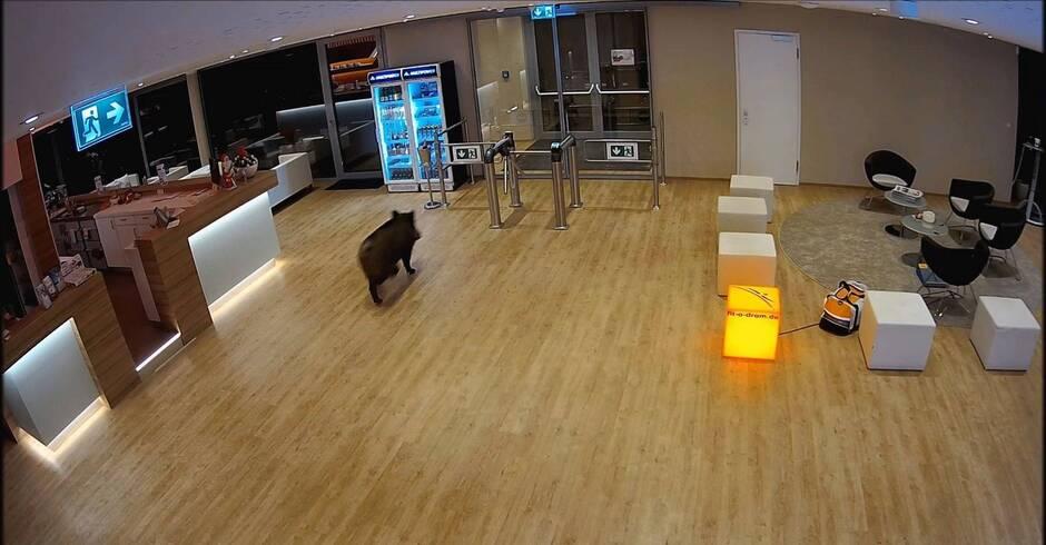 walldorf wildschwein in fitnessstudio eingebrochen. Black Bedroom Furniture Sets. Home Design Ideas