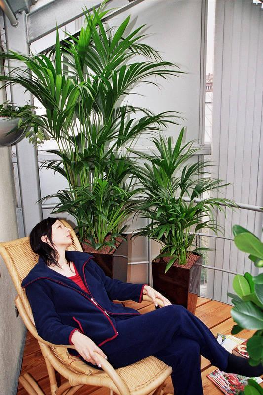 unter 500 lux stirbt die zimmerpflanze exemplare f r dunkle ecken haus garten rhein. Black Bedroom Furniture Sets. Home Design Ideas
