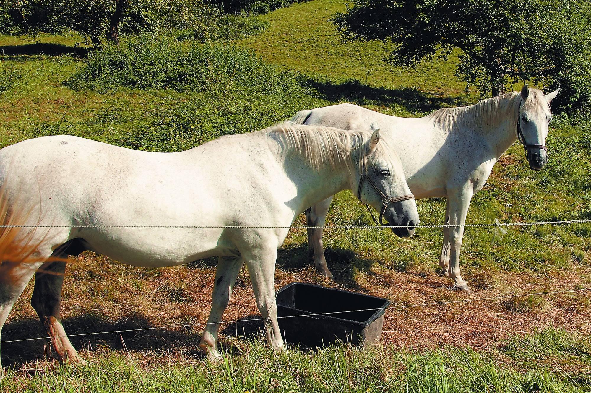 Neckargemünd Pferdesteuer Vorschlag Alarmiert Sportler