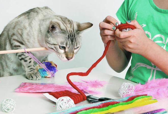 So Einfach Lässt Sich Spielzeug Für Katzen Selbst Basteln