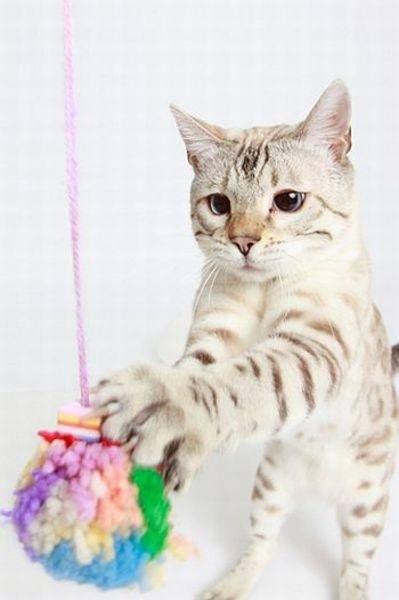 Aus Kartons Und Trinkflaschen Spielzeug Für Die Katze Selbst