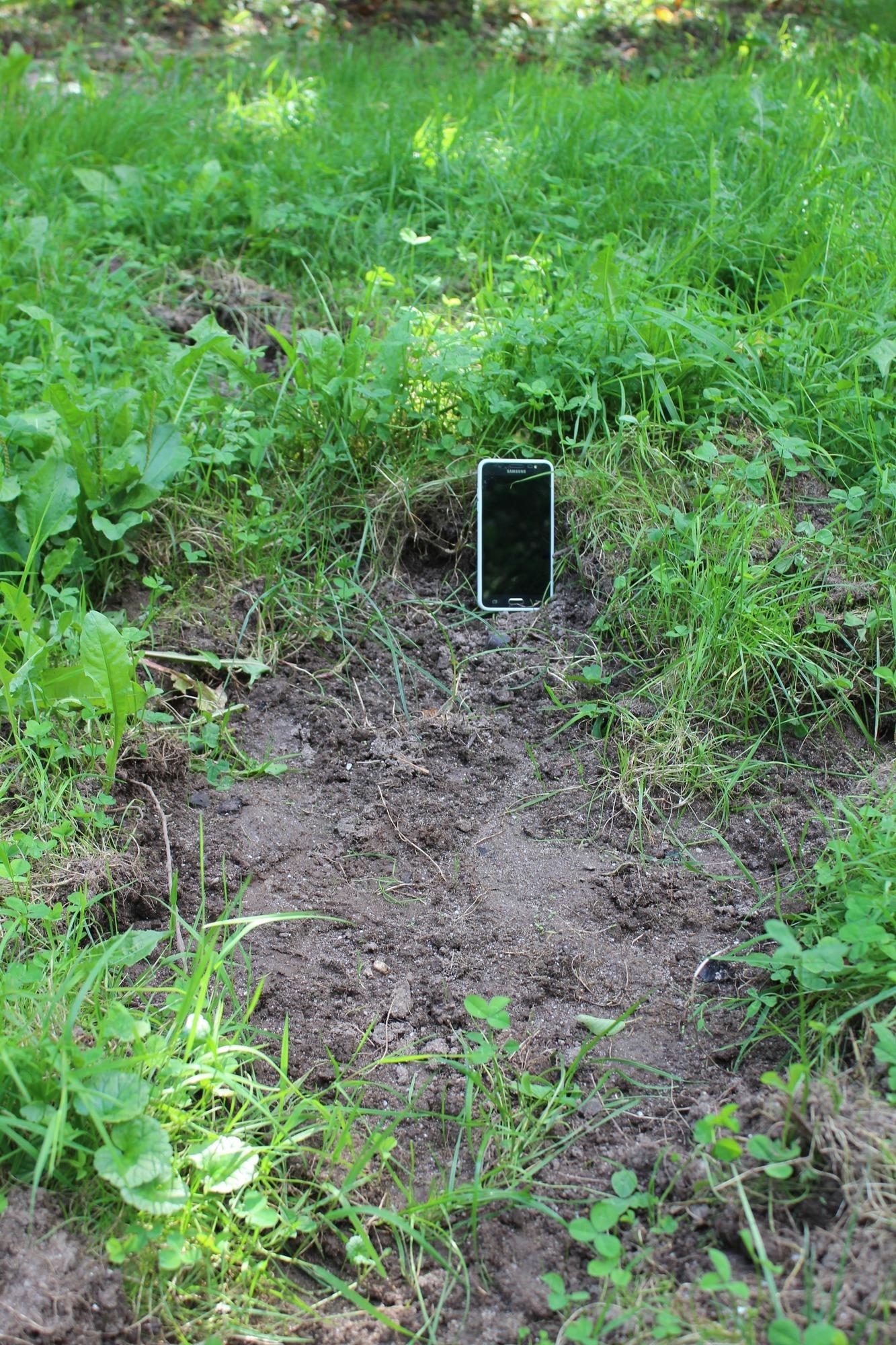 wildtiere in eberbach: wenn nächtens die wildschweine anrücken