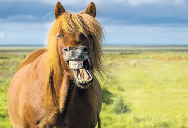 tierische irrt rmer wie viel ps hat eigentlich ein pferd rhein neckar zeitung. Black Bedroom Furniture Sets. Home Design Ideas
