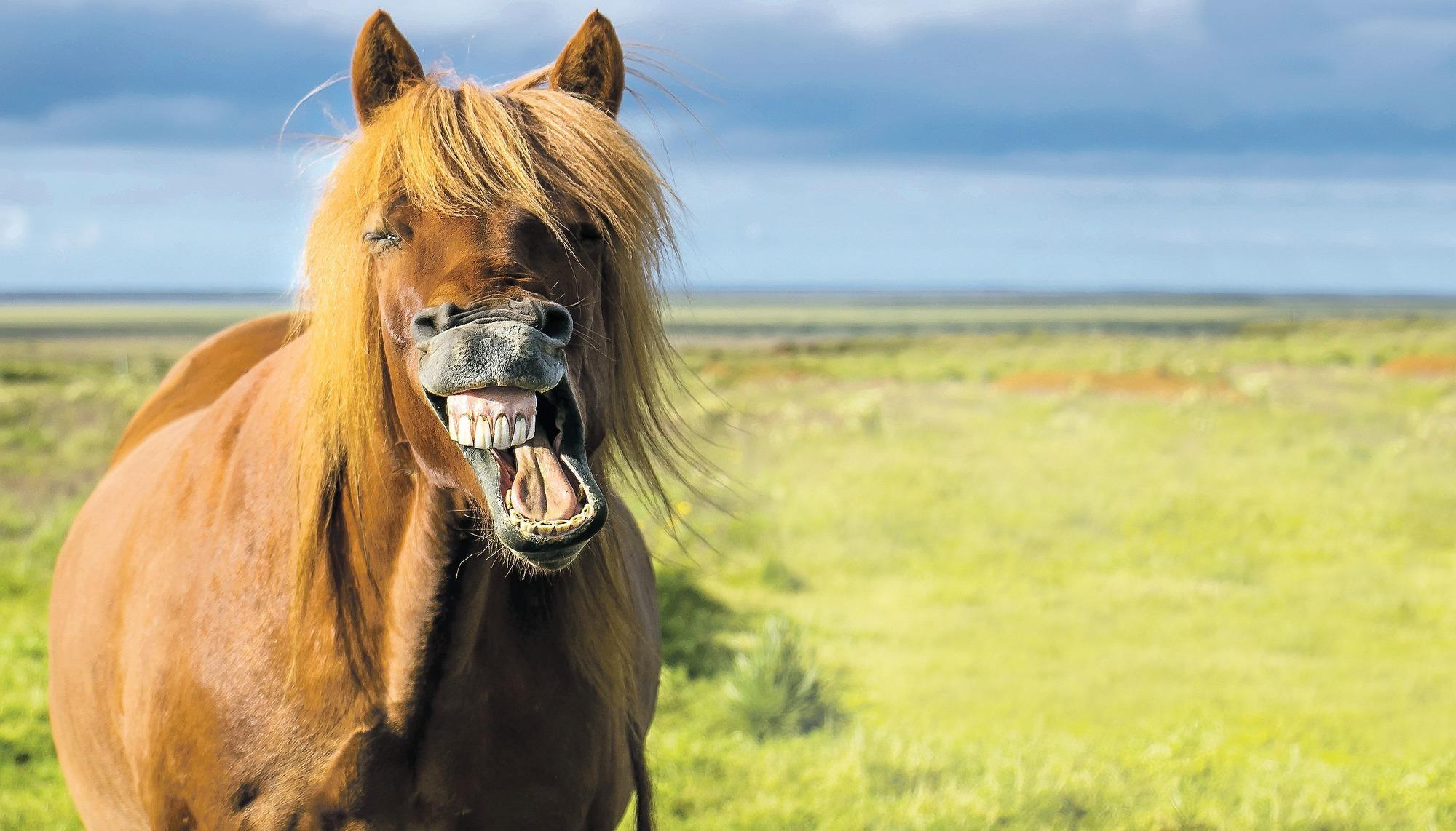 Pferd Ps