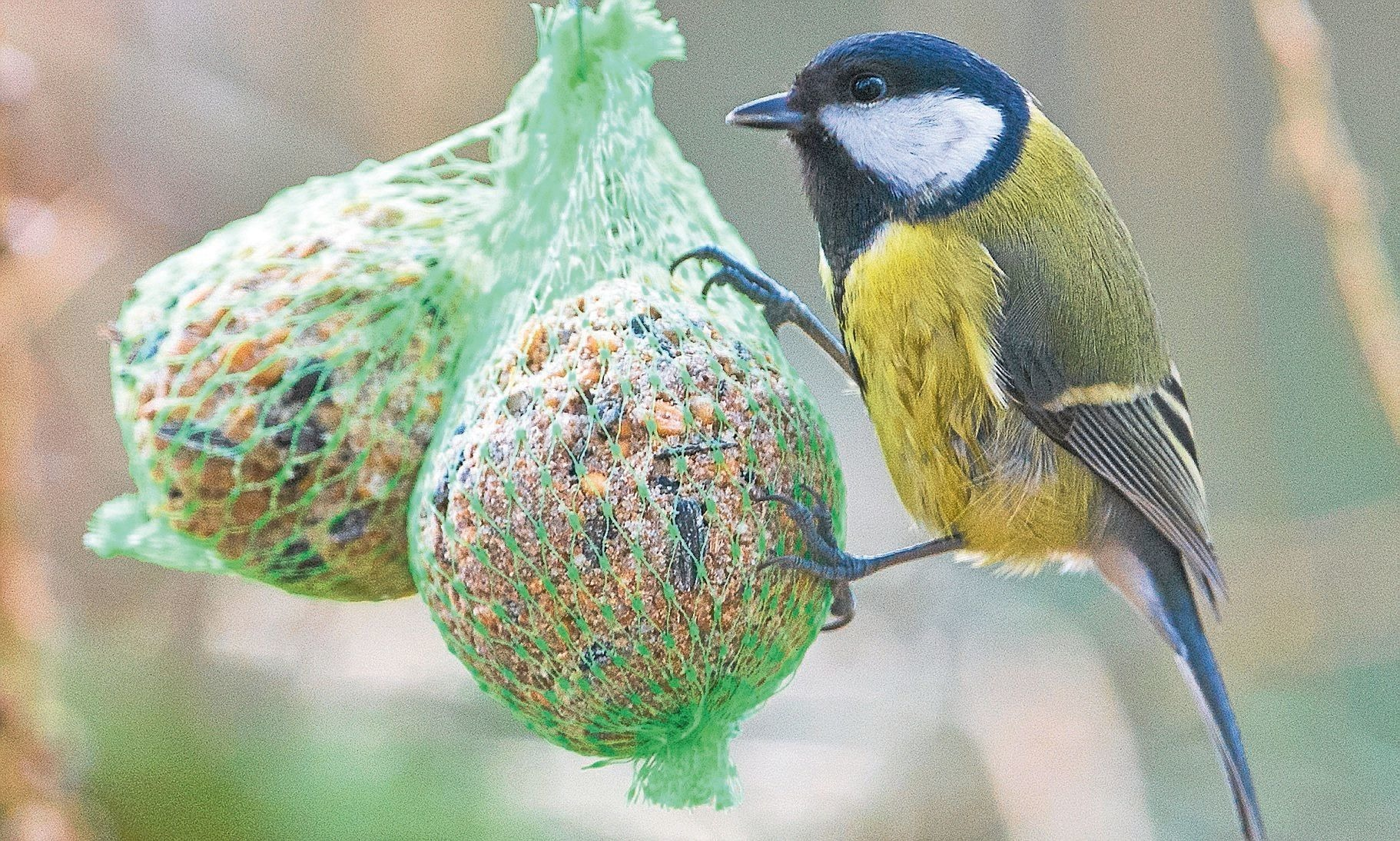 Vogel Im Winter Richtig Futtern Fast Alle Vogelarten Fressen Gerne