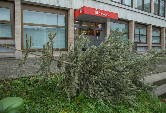 best 28 weihnachtsbaum heidelberg weihnachtsmarkt. Black Bedroom Furniture Sets. Home Design Ideas