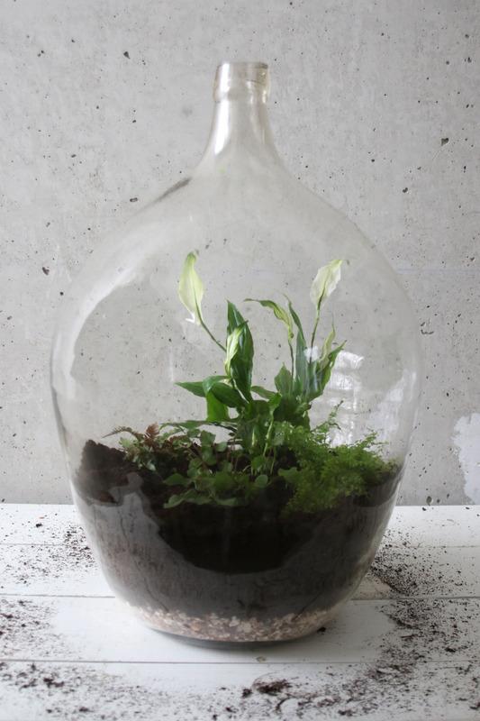 biotop in der milchflasche eine gr ne deko idee f r faule. Black Bedroom Furniture Sets. Home Design Ideas