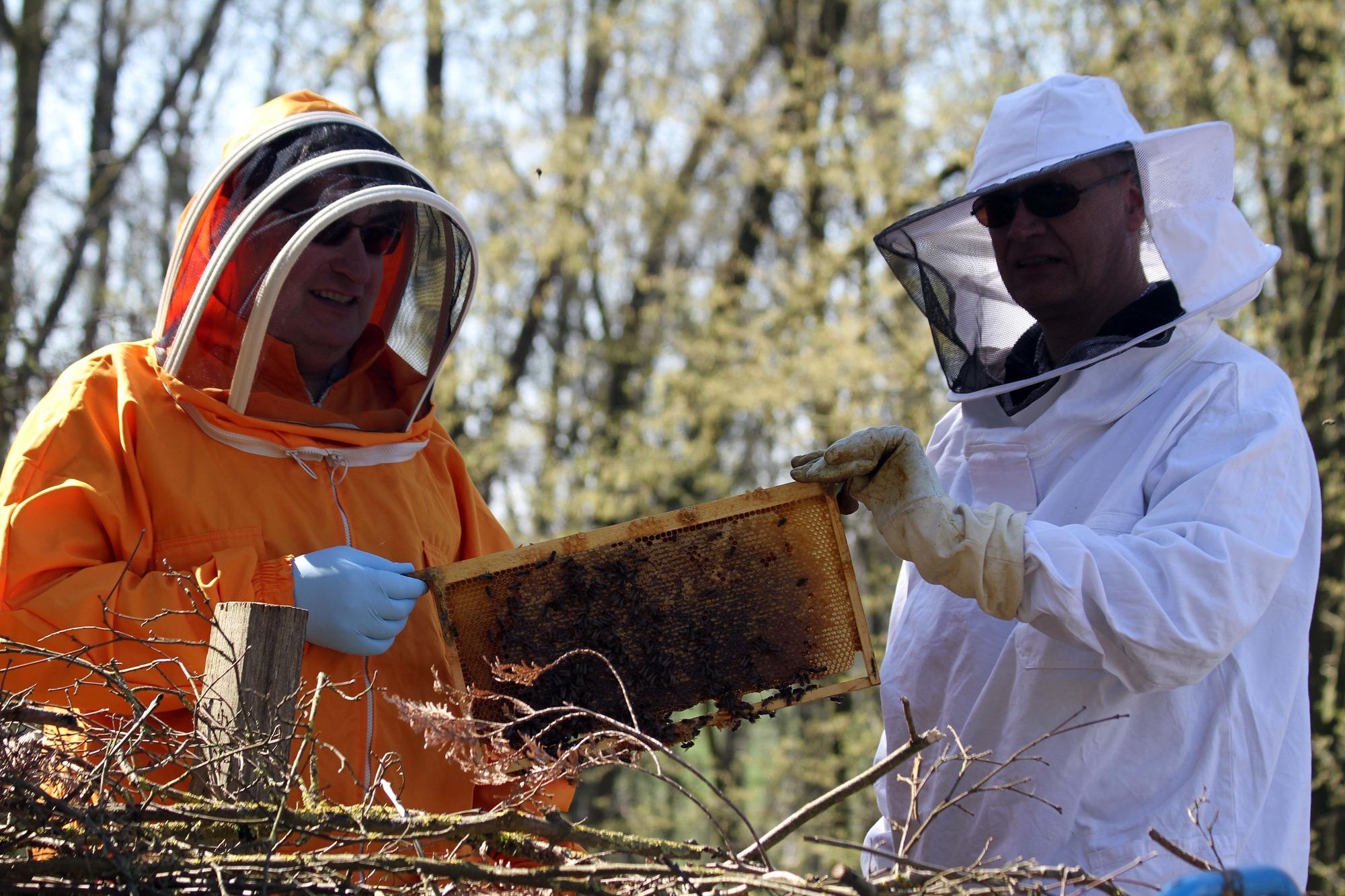 Bezirksimkerverein Wiesloch: Ein Beitrag wider das Bienensterben ...