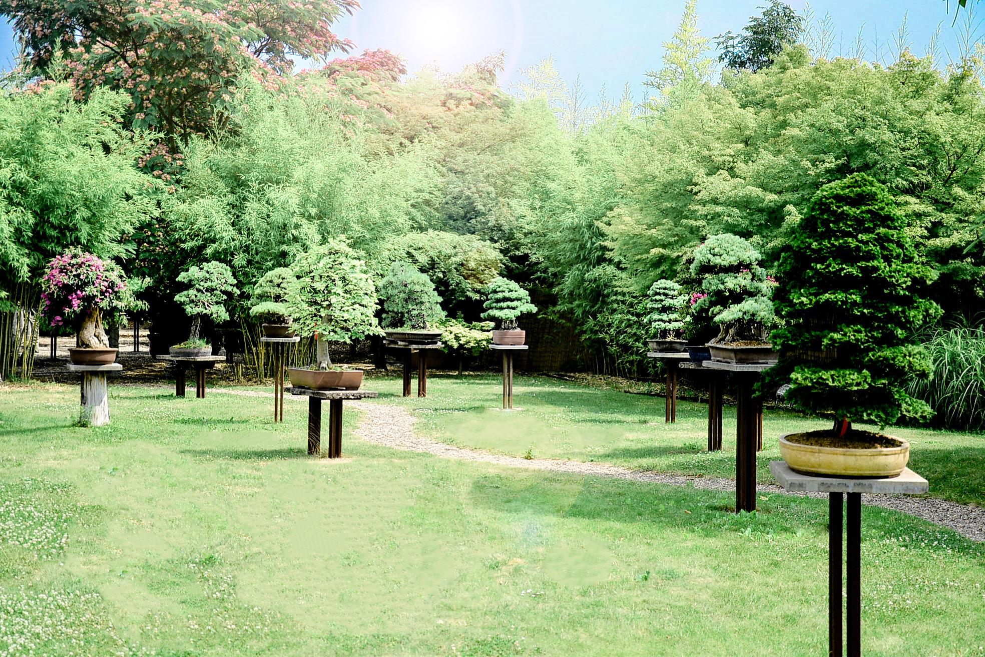 bonsai zentrum heidelberg bonsai zentrum advertorials rhein neckar zeitung. Black Bedroom Furniture Sets. Home Design Ideas