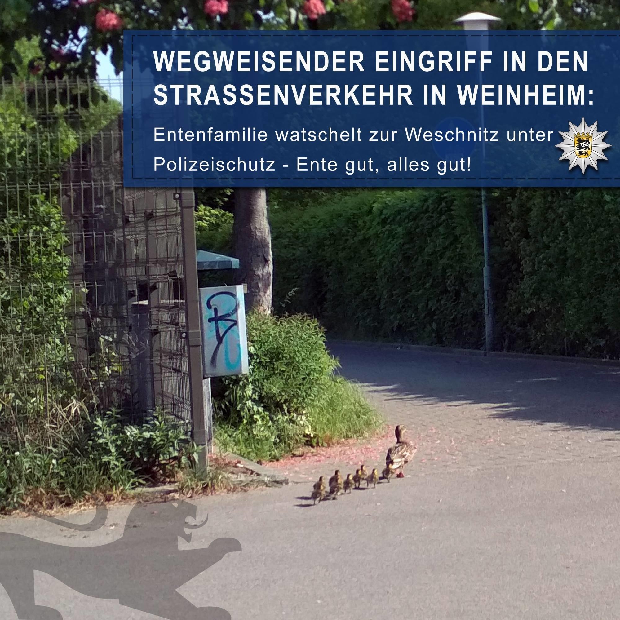 Weinheim Polizei Eskortierte Verirrte Entenfamilie Bergstraße