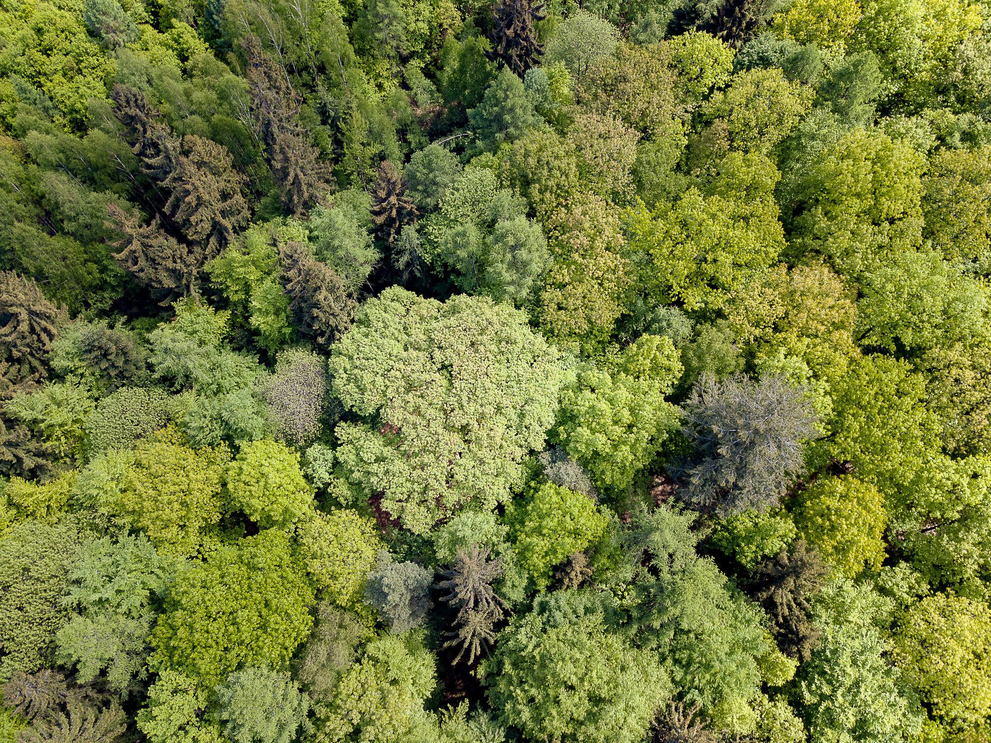 """odenwald von oben"""": kolumbus hat die """"hohe eiche"""" wohl knapp"""