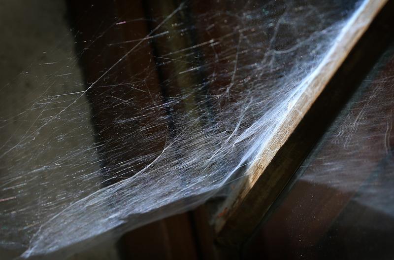 Lastige Hausgaste Welche Insekten Im Haus Sogar Nutzlich Sind