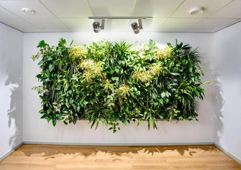 Zimmerpflanzen: Pflanzen, Die An Wänden Wachsen: So Klappt