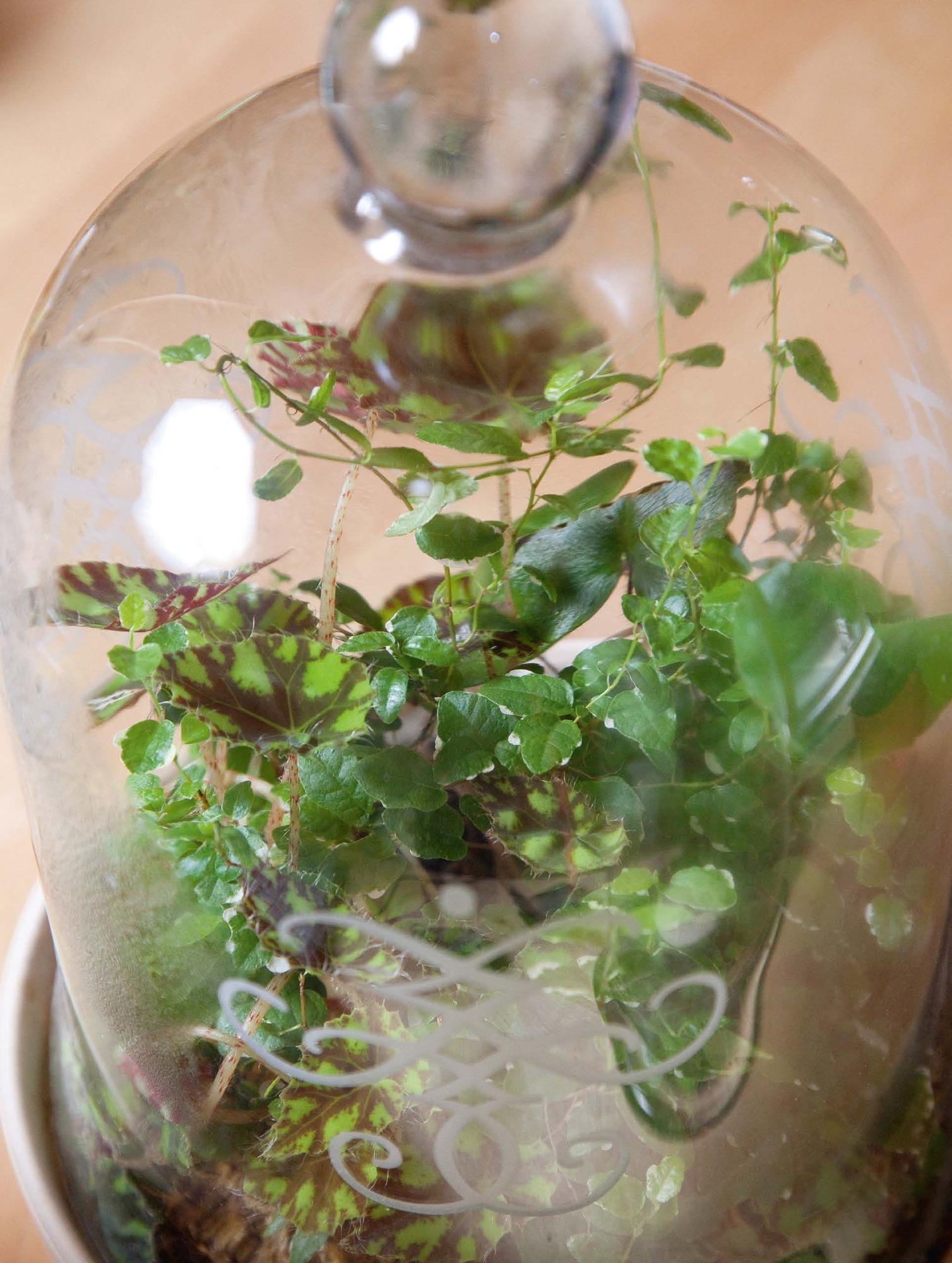 Minigarten Im Glas mini-garten im glas: wie pflanzen in der flasche gedeihen - haus