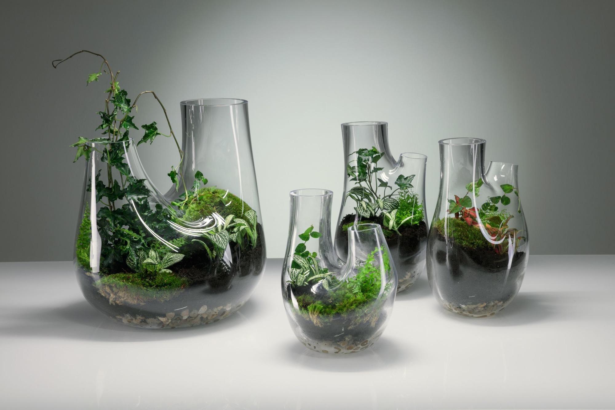 Mini-Garten Im Glas: Wie Pflanzen In Der Flasche Gedeihen