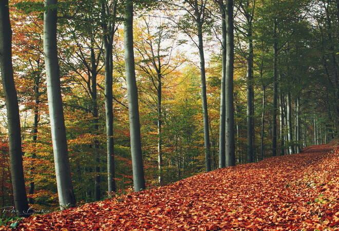 Heidelberger Stadtwald:  Erhöhte Gefahr durch herabfallenden Äste