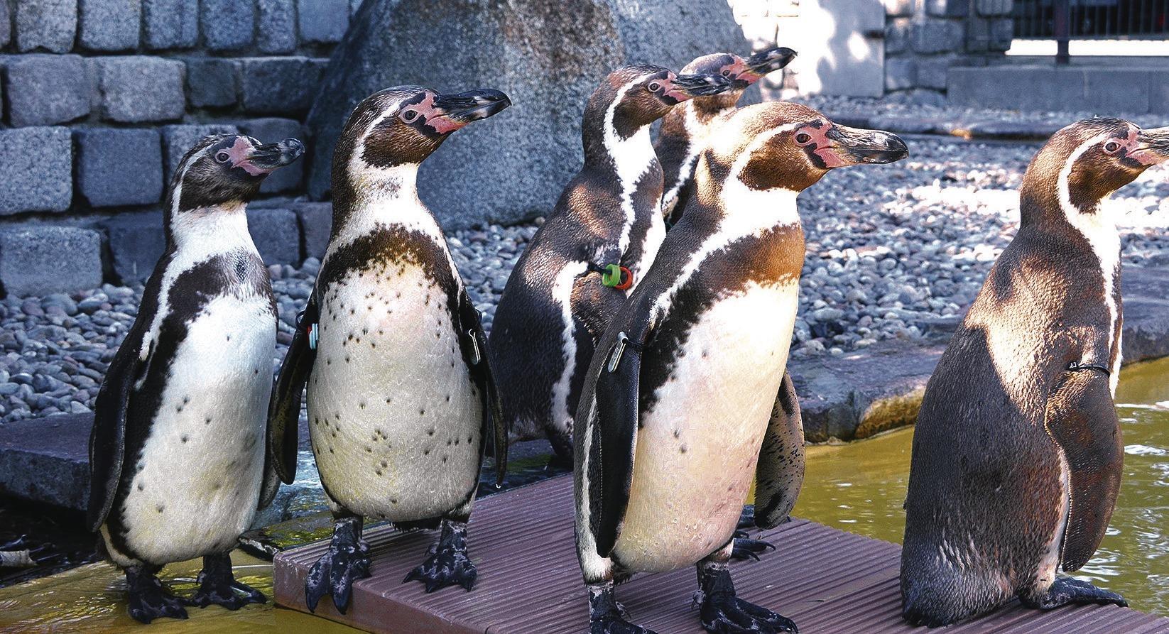 pinguine kennenlernen)